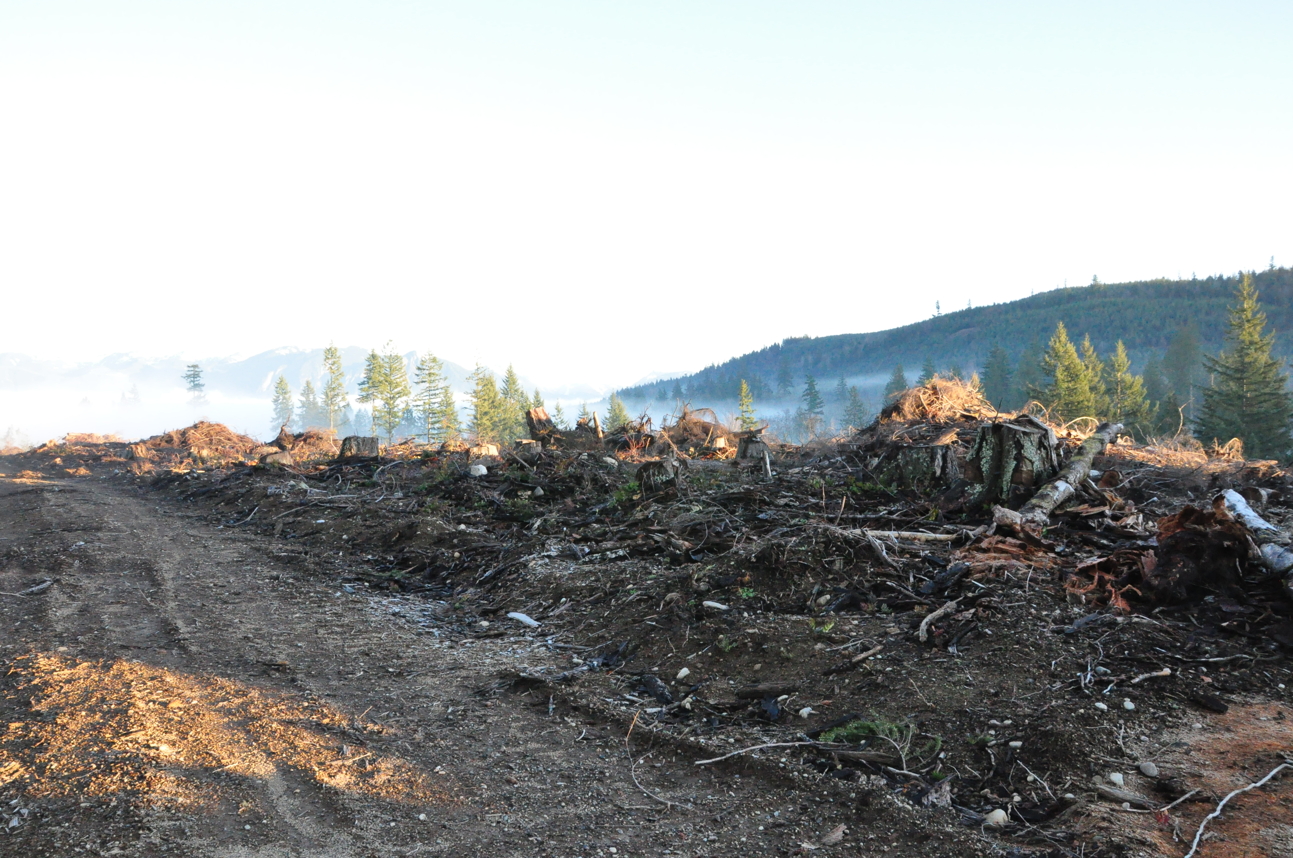 Clearcut with Logging road