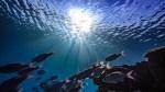 Underwater photo of the ocean