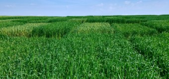 Research Headlines – Putting lesser-known cereal crops on the table