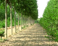 Tree farms grow greener