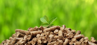 Research Headlines – Biomass crops are energy efficient and climate friendly