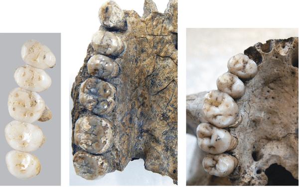 Descubierto en Filipinas un nuevo primo: Homo luzonensis