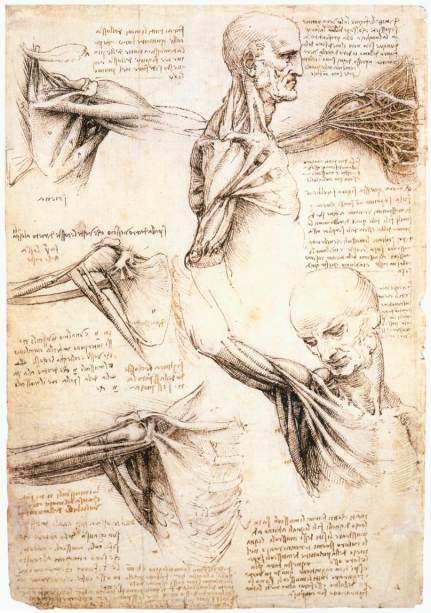 DaVinci_anatomical-shoulder