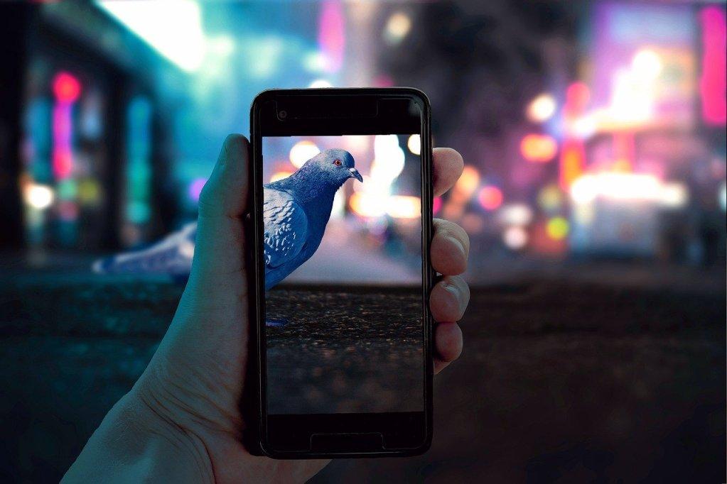 taking, picture, bird