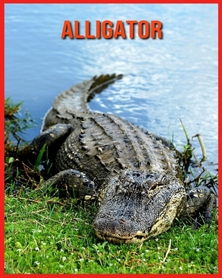 Alligator: Beautiful Pictures & Interesting Facts Children Book About Alligator