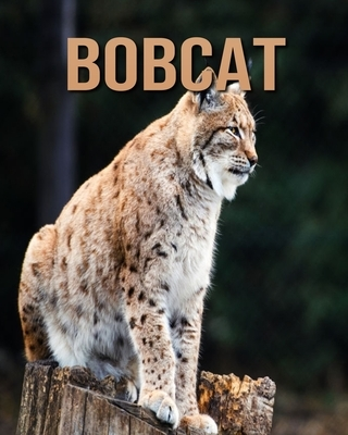 Bobcat: Amazing Pictures and Facts About Bobcat