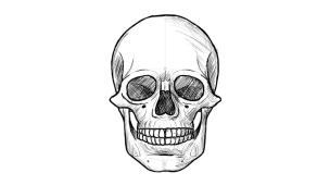 como desenhar cranio humano