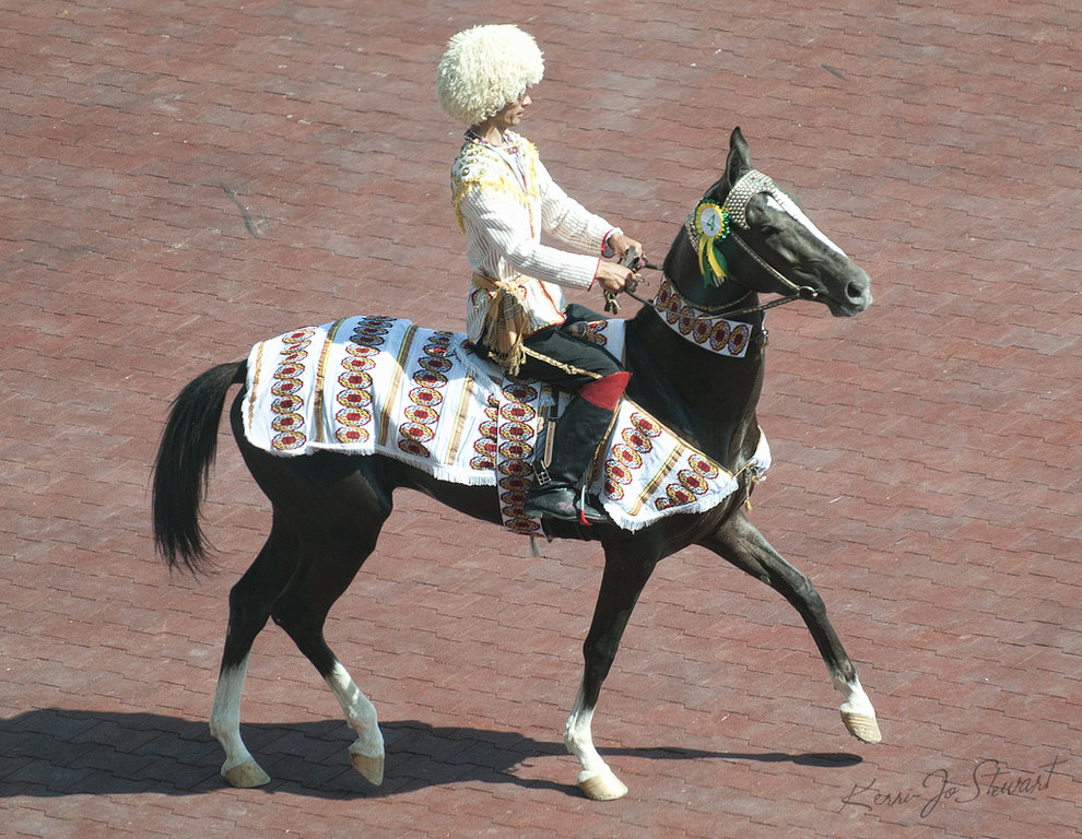 Ahal Teke horse riding tour