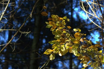 Herbstwaldbild