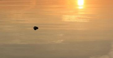 Stein (im Bodenseewasser, keine Wellen, dafür Abendsonne)
