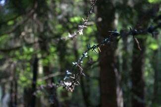 Stacheldrahtzaun im Wald bei Schweinfurt