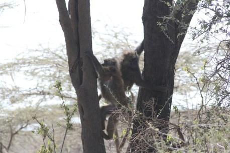 Im Awash Nationalpark, Äthiopien