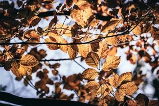 Herbstblätter im Herbst