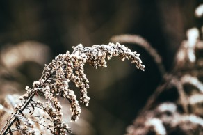 Waldrand winterlich