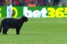 サッカーグラウンドにネコ アップ