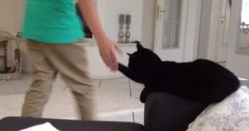猫のハイタッチ