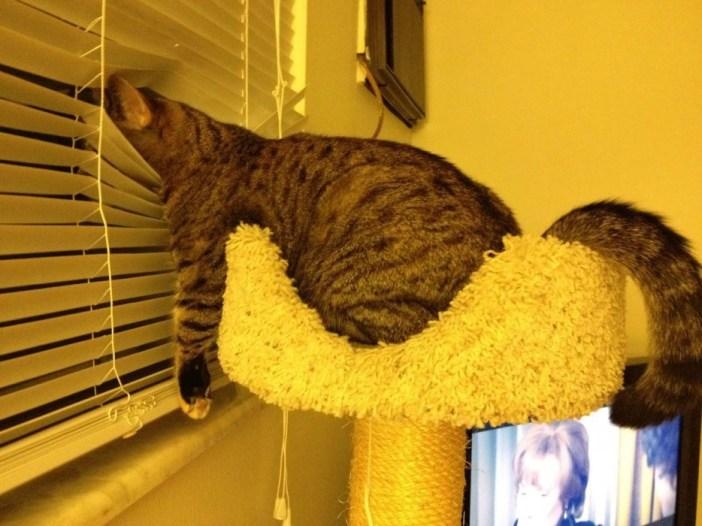 だらっとした猫