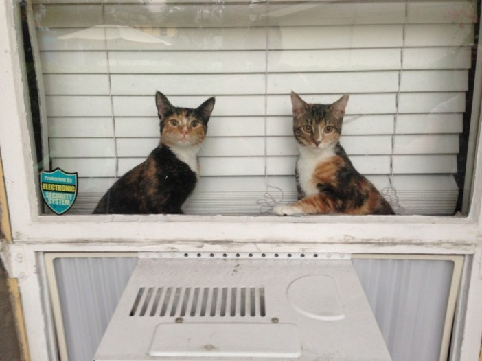 窓際でご主人さまの帰りを待つ猫