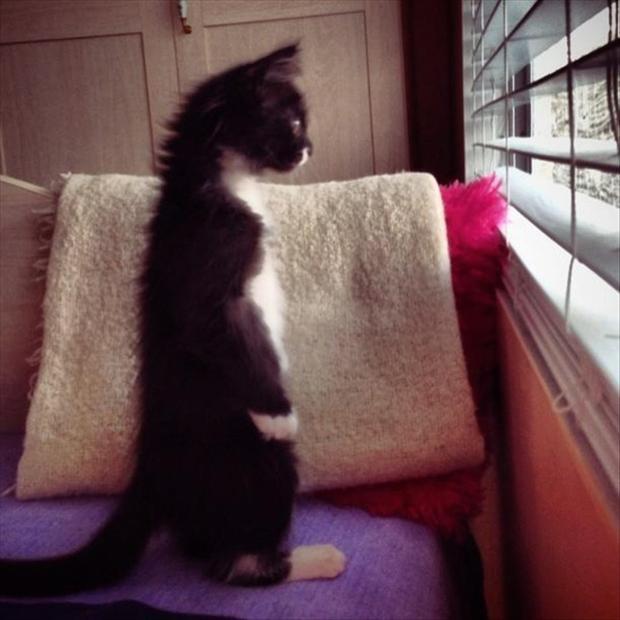 すくっと立ち上がる猫