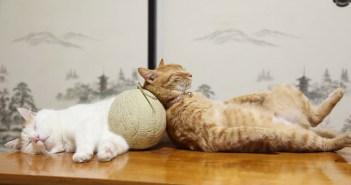 メロン枕と猫