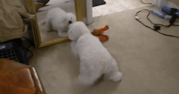 mirror_dog_title
