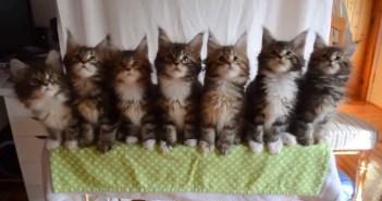 7匹の子猫ちゃん