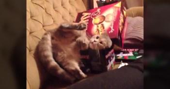 箱に入ろうとする猫