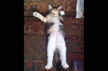 不思議な動きの猫