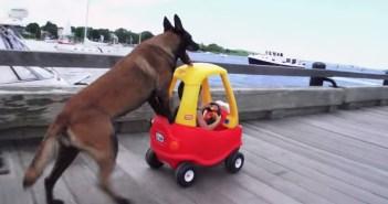 子供用の車を押す犬