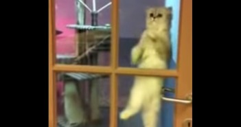 不思議なネコダンス