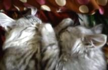 猫の鼻をにぎにぎ