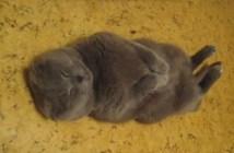 お行儀良く眠る猫