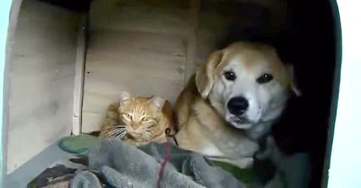 犬小屋にいつの間にか住み始めた猫