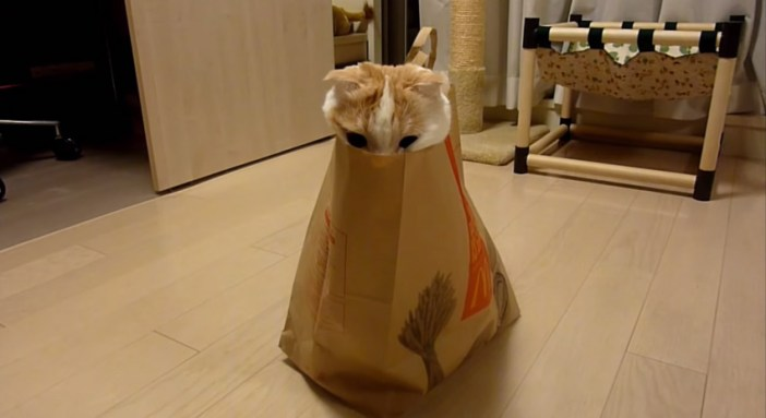 猫が顔をちょこん