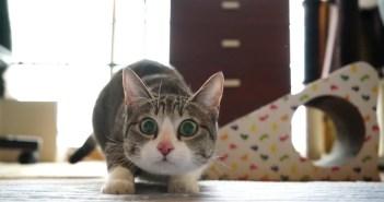 お尻フリフリ猫