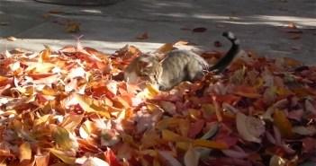 落ち葉で遊ぶ猫