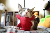 ザリガニ猫
