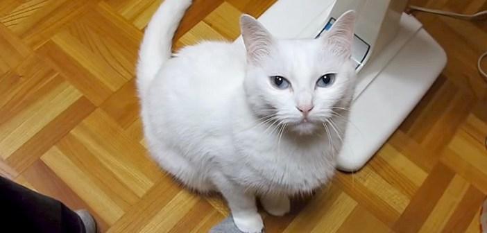 足を踏む猫
