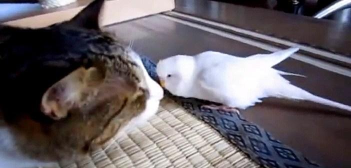 猫とインコ