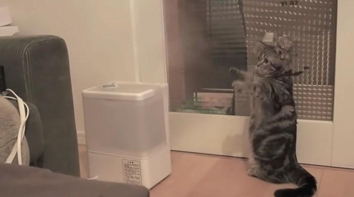 加湿器と戦う猫