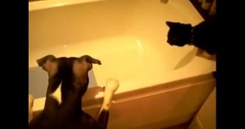 お風呂のオモチャが気になる犬と猫