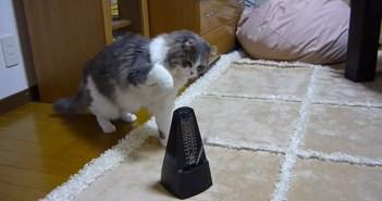 メトロノーム猫