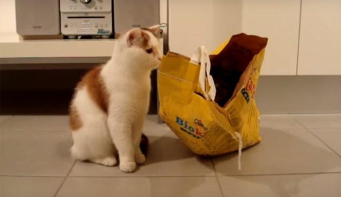 袋の中を覗き込む猫