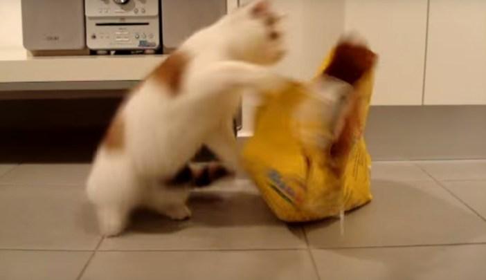 強烈猫パンチを繰り出します!