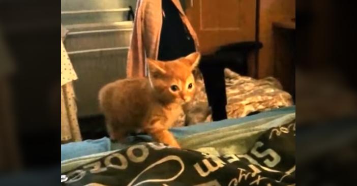 猫パンチ子猫