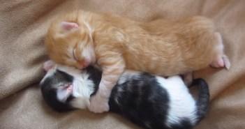 抱き合いながら眠る子猫