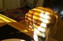 朝食を食べたい犬