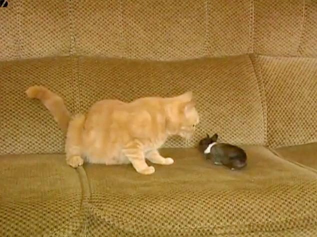 赤ちゃんウサギと母猫
