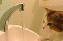 水に興味津々な猫
