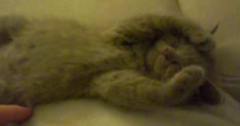 寝ている子猫を撫でてみると…